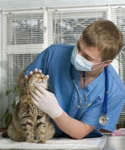 Антибиотики для кошек список уколы при инфекции в таблетках