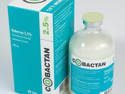 Кабактан антибиотик для кошек