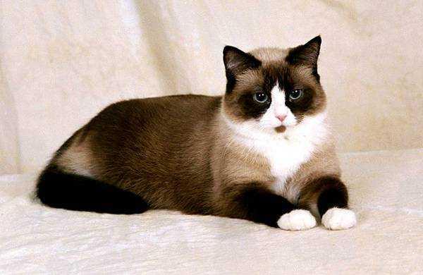 Сколько пород в мире существует кошек