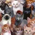 700 кошек в одном доме, или кошачий перекрёсток
