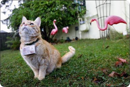 Кот Купер — кошачий фотограф