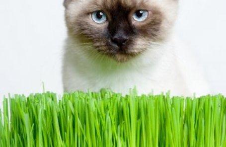 Если кошка ест цветы, на это есть свои причины