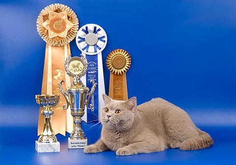 Как стать котом — чемпионом мира, инструкция по выставкам