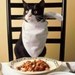 Правила кормления и особенности питания кастрированного кота