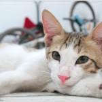 Кошке после стерилизации необходим особый уход