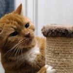 Как сделать когтеточку для кошек своими руками?