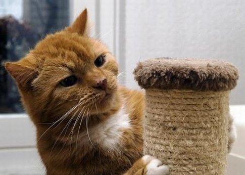 Точилки когтей для кошек своими руками