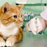 Как правильно и безболезненно сделать укол кошке