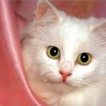 Лечение и причины аллергии у кошек