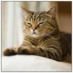 Боремся с паразитами — как избавится от блох у кошки
