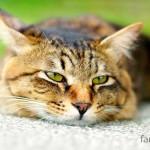 Как лечится цистит у кошек — причины, лекарства и профилактика