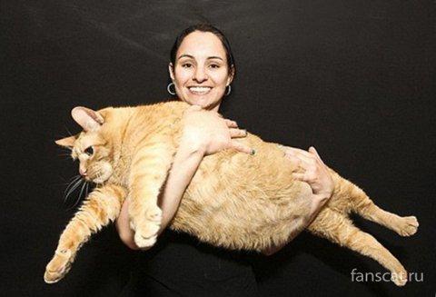 Самый толстый кот рекорд