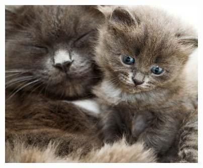 Беременность у кошки по неделям сколько длиться фото