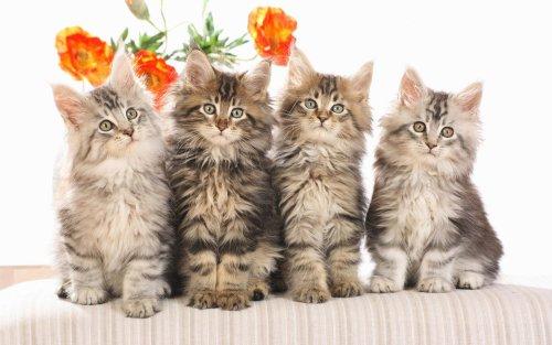 Как правильно выбрать кошачьи имена для девочек?
