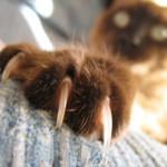 Как подстричь кошке когти, или кошачий маникюр