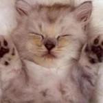 От чего и в какие сроки делать прививки котенку