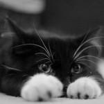 Как правильно измерить температуру у кошки и не быть исцарапанным?