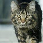 Сколько лет вашей кошке — определяем возраст