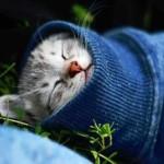 Все о простуде у кошек — симптомы, лечение и профилактика