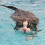 Почему кошки боятся воды —  история, факты и выводы