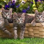 Как правильно принять роды у кошки — советы и правила
