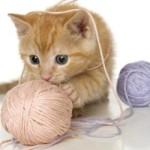 Какие игрушки нравятся кошкам и как сделать их своими руками