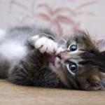 Аллергия на кошек у человека — причины, проявление и предупреждение
