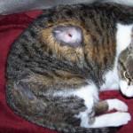 Как правильно вытащить клеща у кошки в домашних условиях