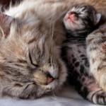 Первые роды у кошки — проблемы, которые могут возникнуть
