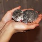 Все о том, как выкормить котенка без кошки — уход, питание и воспитание