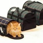 Переноски для кошки — основные виды, как выбрать и на что обратить внимание