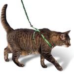 Надеваем на кошку шлейку — правила и советы