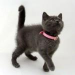 Противоблошиный ошейник для кошек — как выбрать и применять