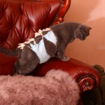 Стерилизация вашей кошки — в каком возрасте, как и где