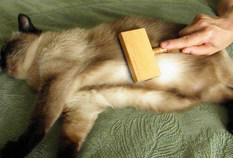 Какие витамины нужно давать кошкам от выпадения шерсти, а также причины линьки