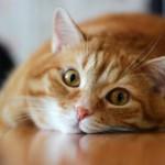 Как меняется поведение кота после кастрации — особенности дальнейшей жизни