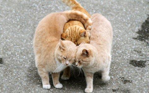 Причина кастрация котов