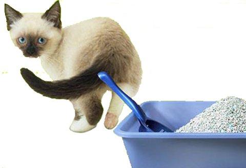Какой наполнитель использовать для лотка котенка — силиконовый, древесный или глиняный?