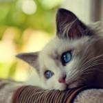 Операция по стерилизации кошек — все аргументы за и против