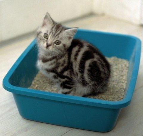 Силиконовый наполнитель для котов