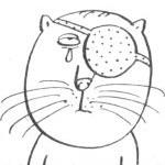 Гигиена глаз у кошек — чем и как лучше промывать котенку  глаза