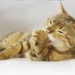 Отзыв о кормлении кошки кормом Хиллс