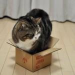 Почему все кошки так любят коробки, шкафы и другие укромные места