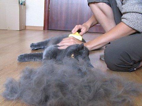 Кот волосы в желудке