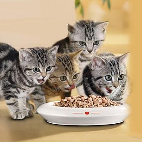 котята едят