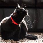 Проблема линьки у домашних кошек и способы ее предупреждения