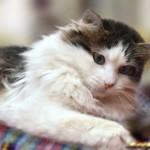 Cтерилизация кошек — последствия и изменения в поведении животного