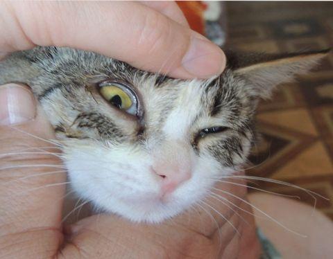 Слепой на один глаз кот