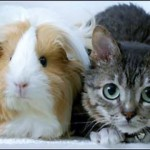 История самого маленького кота в мире, мистера Пибблза