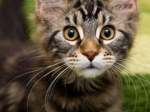 cat-3